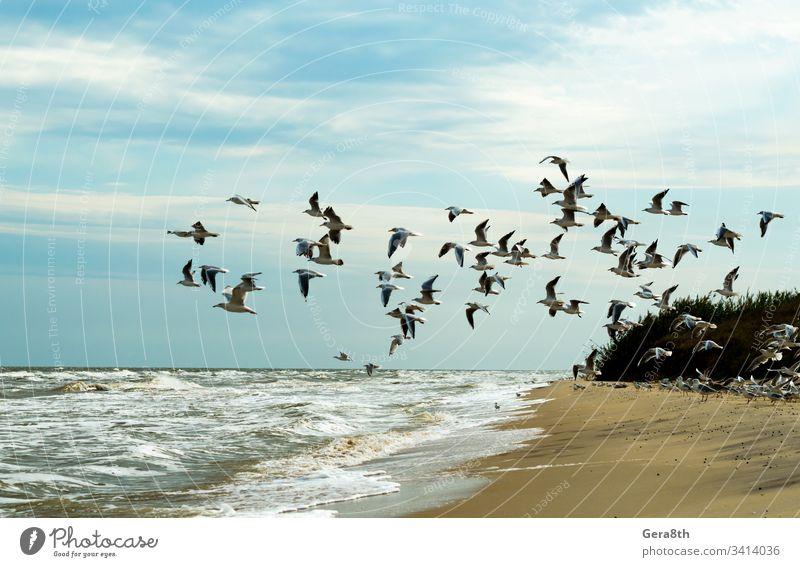seagulls are flying over the sea a flock of birds a flock of seagulls a lot beach blue sky clouds flight foam horizon landscape nature sand sea foam