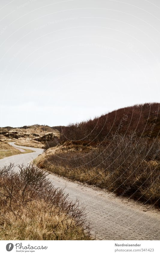 Between the dunes Calm Vacation & Travel Tourism Summer Nature Landscape Plant Bad weather Grass Bushes Wild plant Coast North Sea Traffic infrastructure