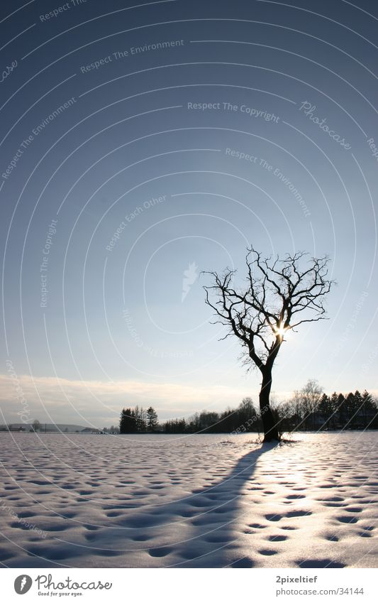 Sky Blue White Tree Sun Clouds House (Residential Structure) Black Landscape Snow Field