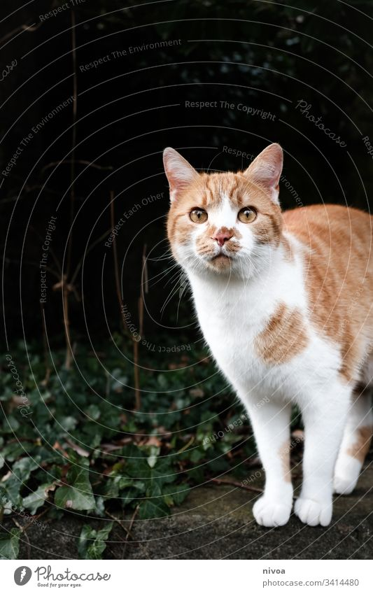 red white cat Cat Pet out Colour photo Animal Domestic cat Deserted Animal portrait Looking Pelt 1 Whisker Animal face Day Curiosity Snout Cute Cat's head