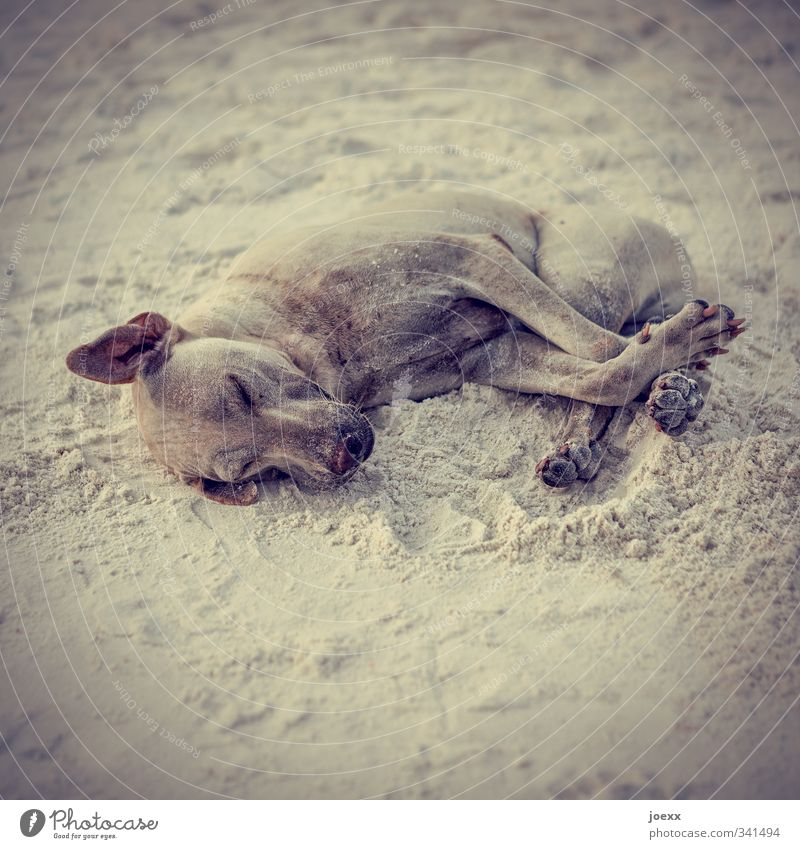 wellness Pet Dog 1 Animal To enjoy Lie Sleep Cuddly Brown Gray Black Colour photo Subdued colour Exterior shot Deserted Day Shallow depth of field Closed eyes