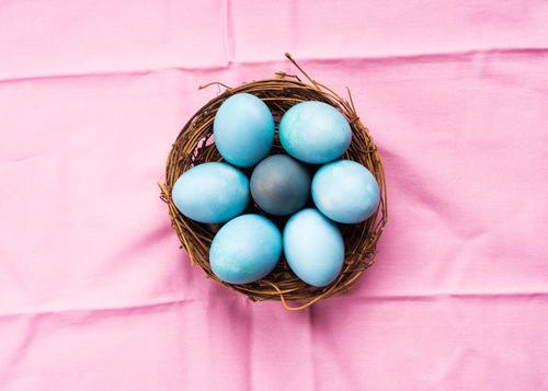 Colorful blue boiled easter eggs in nest on pink background colorful pastel above happy hard hen hunt minimal ornament rustic greeting season spring symbol