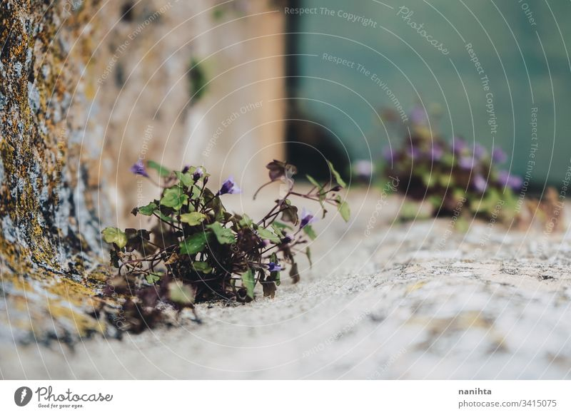 Little plant growthing in a well wall flower nature life spring stone leaf leaves part part of plant bokeh blur natural water view background copyspace