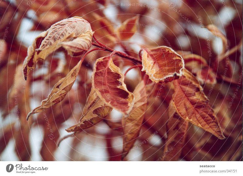 Red Winter Yellow Autumn Brown Fog November Maple tree Ash-tree