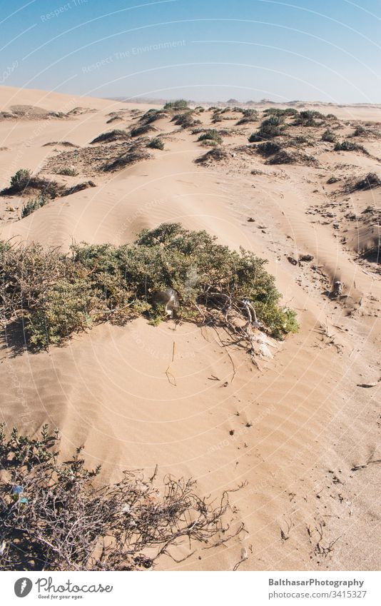 Coastal dunes (Sahara) Morocco Africa plastic waste Sand sand dune Dune grasses Bushes Wind Horizon Sunlight Landscape Vacation & Travel Deserted Nature