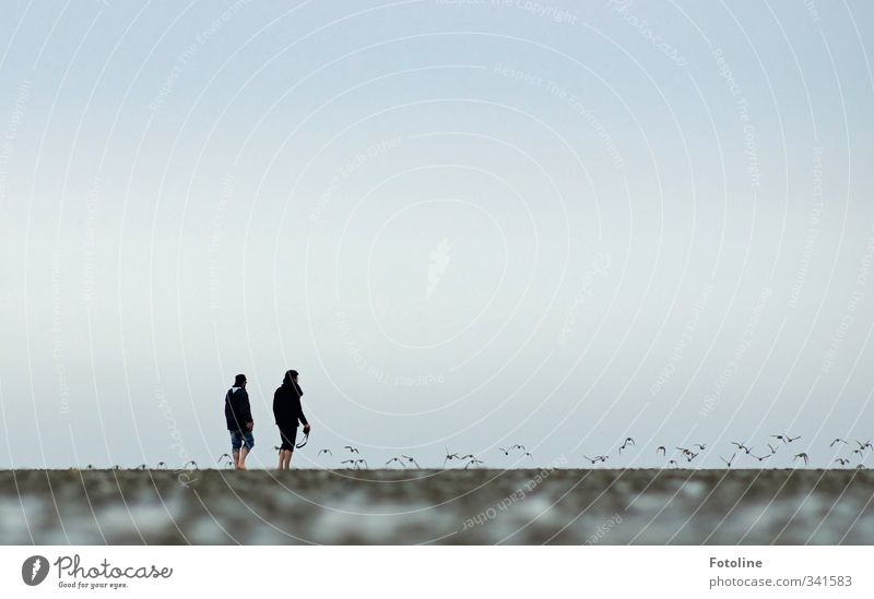 Rømø, two men and the mud flats. Human being Masculine Man Adults 2 Environment Nature Animal Elements Earth Coast Beach North Sea Bird Flock Natural Mud flats