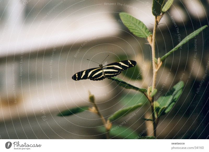Butterfly01 Green Insect Animal Twig Wing