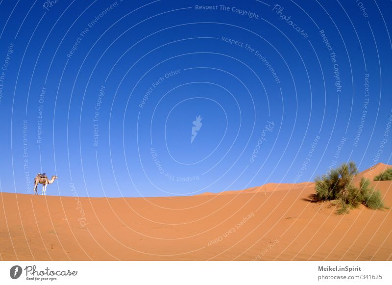 Sky Nature Vacation & Travel Loneliness Landscape Animal Warmth Sand Air Leisure and hobbies Climate Beautiful weather Bushes Desert Dune Drought
