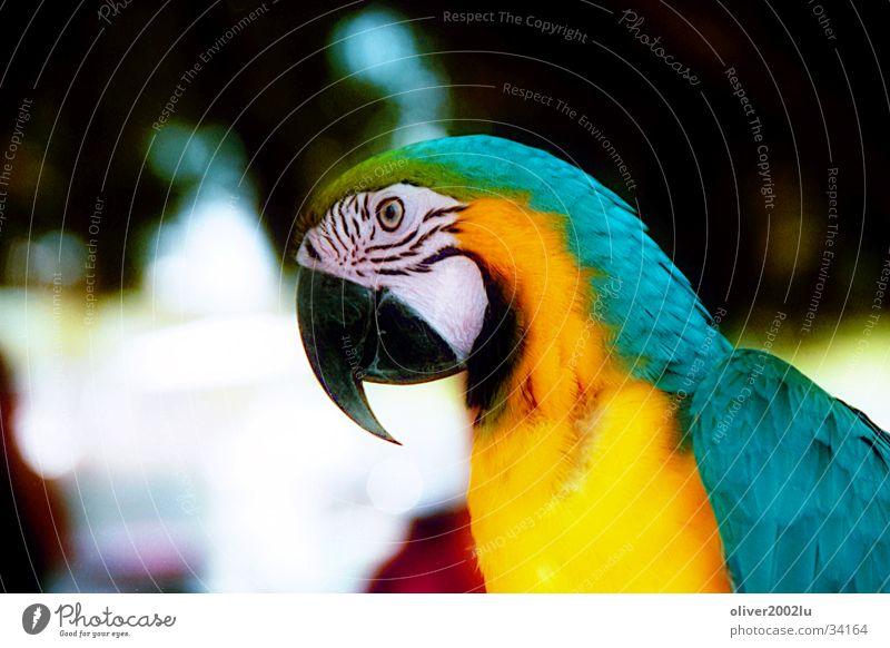 parrotlike Animal Parrots Bird