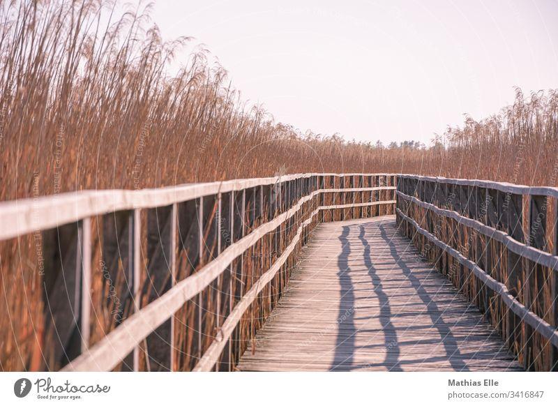 Wooden footbridge in the bog Footbridge wooden walkway Bog Sky Sunbeam Sunlight warm Hot Wood grain old wood Handrail wooden rail reed Bushes Common Reed