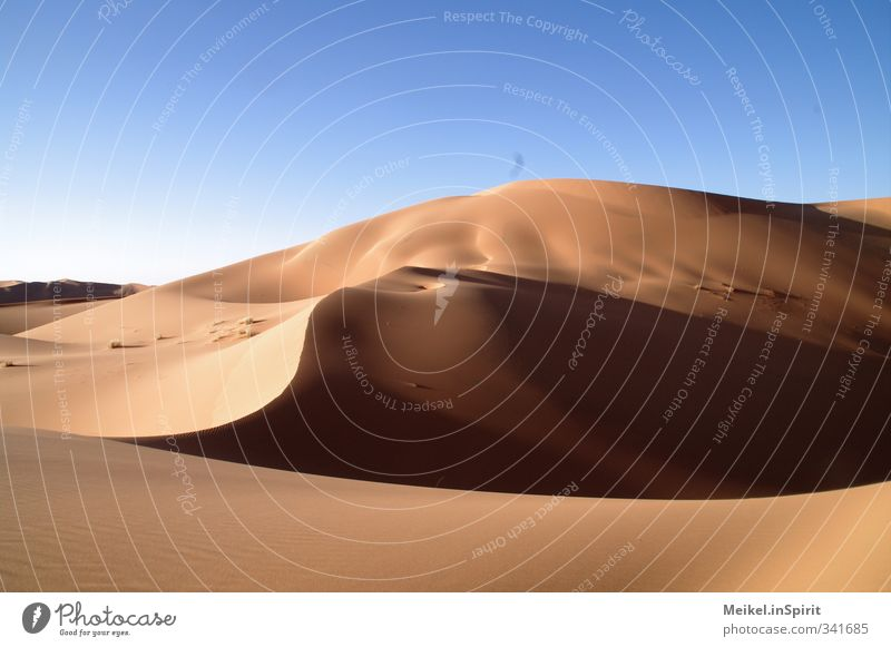 Sand like gold Environment Landscape Cloudless sky Climate Climate change Beautiful weather Warmth Drought Hill Desert Sahara Erg Chebbi Dune Hot Blue Brown