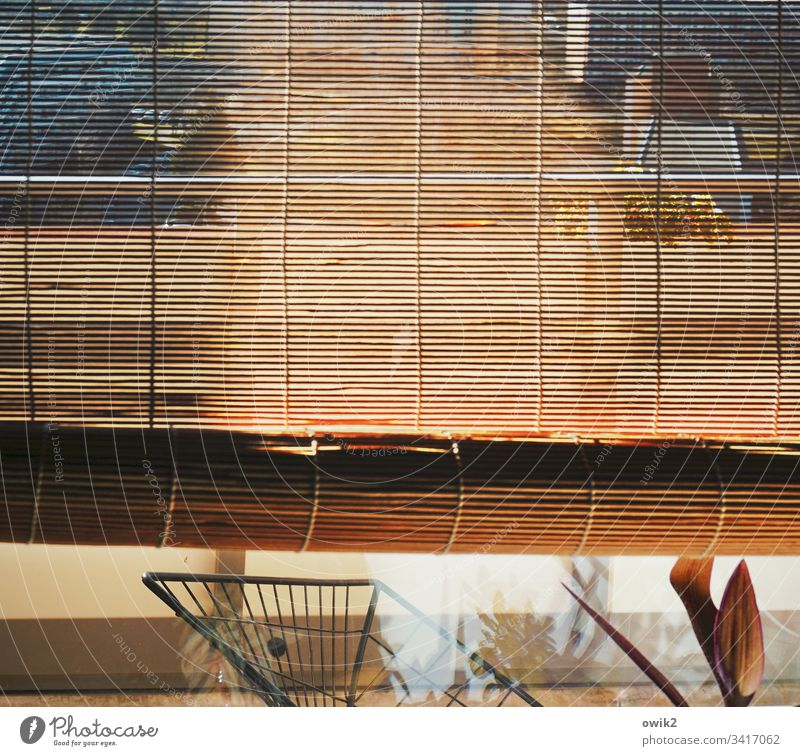 Discreet glances Venetian blinds bamboo roller blind Roller blind Window Glass Window pane Vista Vantage point detail Detail slats Thin Transparent Translucent