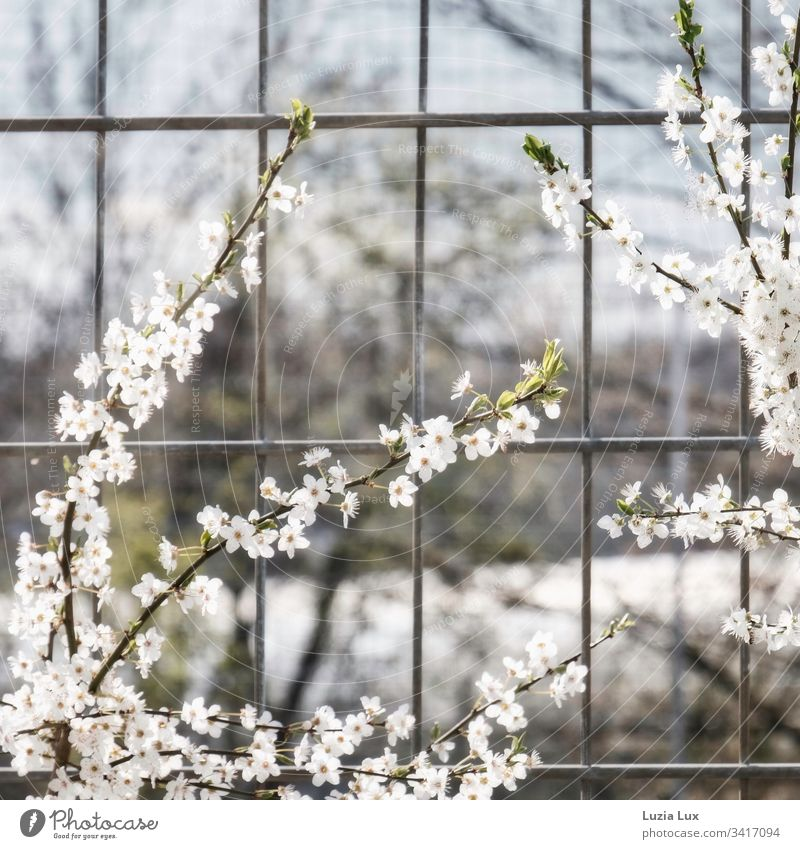 Spring blossoms, big city flair Town Fence Grating sunshine urban Gloomy Delicate Beautiful Bright Sun White