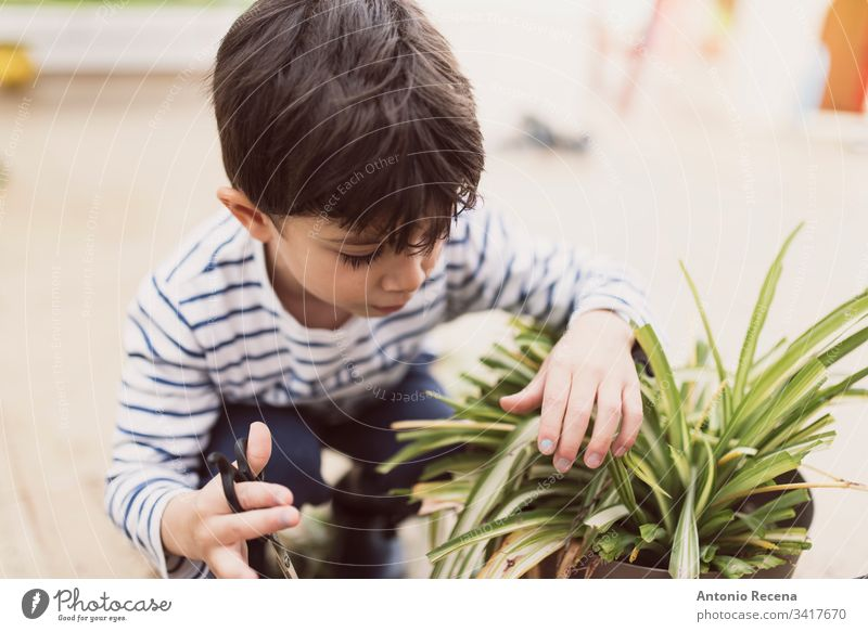 Little boy pruning flower pot at home as a gardener child kid 3-4 years old 4-5 years old children cut gardeners gardening plants patio spring family pots