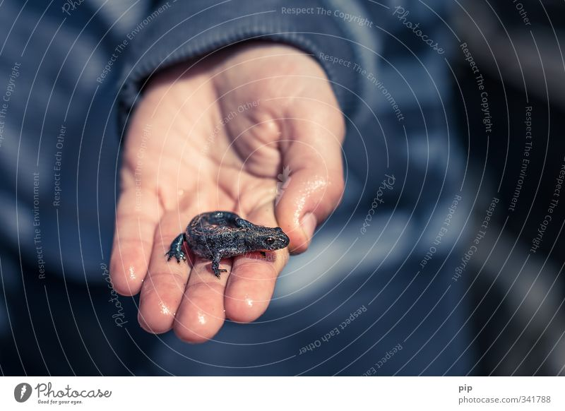 kite tames for beginners Human being Child Hand Fingers 1 Wild animal Newt Saurians Amphibian Animal Baby animal Looking Disgust Small Wet Cute Gray Infancy