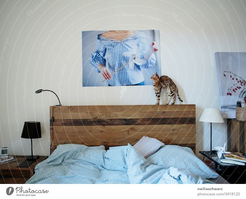 Bedroom Bedclothes Cat bengal cat Image Lampshade Blue Gray Flat (apartment) at home tranquillity Bedside table