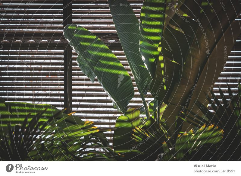 Green leaves of tropical plants growing in a lath house nature natural leaf park garden botanic botanical botany green flora vegetation foliage ecology growth