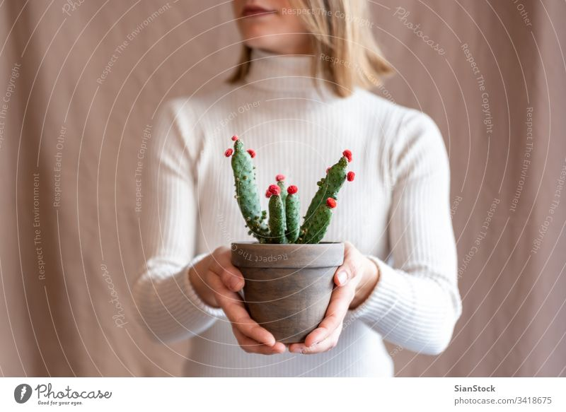 Woman holding a cactus pot flower woman hands plant florist gift floral indoor show lips mouth background person female bloom botanical flowers green girl