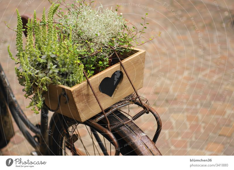 Bicycle with heart Transport Means of transport Driving Stand Old Simple Uniqueness Brown Decoration Wood Wooden box Heart Heart-shaped Plant Retro