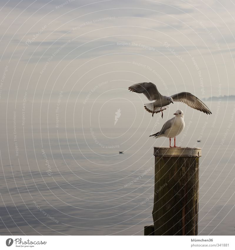 Water White Animal Movement Freedom Gray Lake Natural Bird Flying Wild animal Stand Wing Curiosity Animal face Seagull