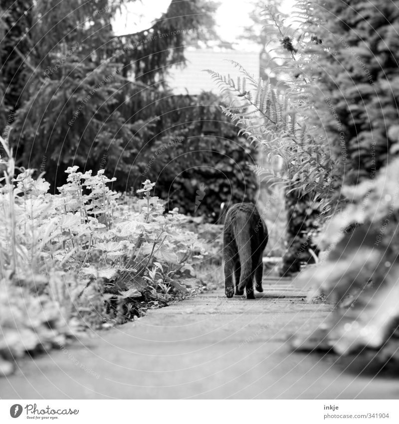 Cat Nature Summer Tree Loneliness Animal Environment Autumn Emotions Lanes & trails Garden Moody Going Park Bushes Curiosity