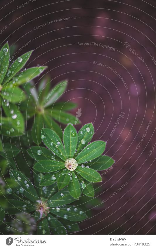 Water drops rain on green plant leaves star-shaped Drops of water Plant Wet Stars Precipitation Rain Spring Pattern Green Growth wax Trickle Ground Beautiful