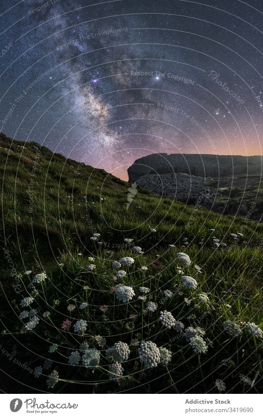Peaceful green lawn on starry night nature landscape sky field flower milky way grass light dark galaxy colorful season travel environment view hill wild