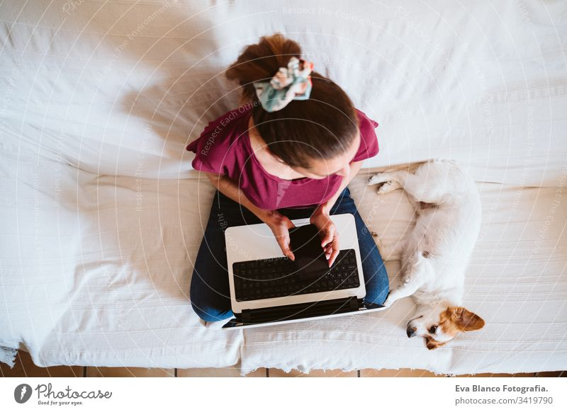 young woman working on laptop at home, sitting on the couch, cute small dog besides. Technology and pets concept jack russell friendship together togetherness