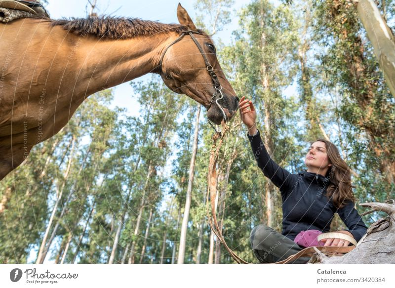 A young woman sitting cross-legged holds her hand to the nostrils of her horse from a frog's perspective. Horse Animal Farm animal Young woman Nature
