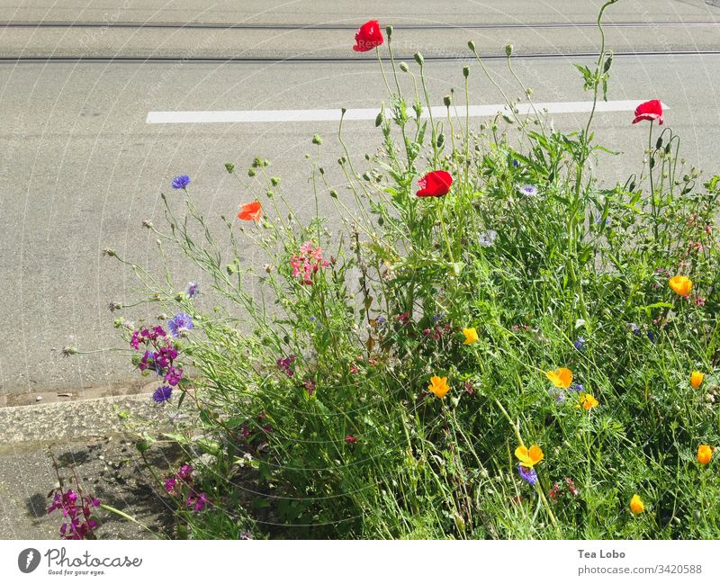 Sidewalk flowers Blossom Spring Flower Plant Nature City Exterior shot Spring flower Garden Spring flowering plant Day Blossoming Worm's-eye view Green