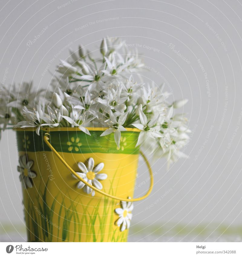 Nature Green Beautiful White Plant Flower Yellow Spring Blossom Natural Metal Idyll Arrangement Living or residing Stand Fresh