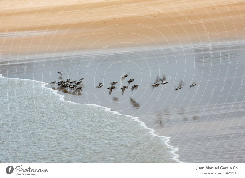 Flock of birds on the shore of the beach water animals coastal flock group seascape outdoors nobody behavior north wildlife sand colony ocean land flying