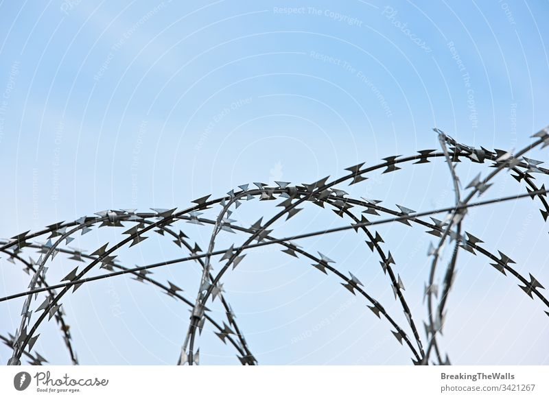 Barbwire security rolls protection over blue sky barbed day closeup sharp copy space low angle side view metal fence wall guard restricted area boundary border