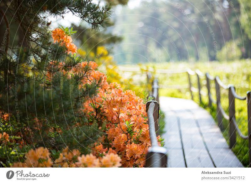 Helsinki, Finland - June 7, 2019: Rhododendron public park in forest in Helsinki, Finland. Beautiful flowers in bloom, wooden paths and pine trees. People walking in summer park.