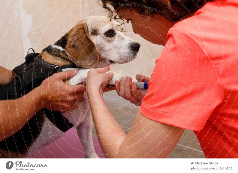 Vet doctors cutting nails of big dog in clinic veterinary woman treat care uniform calm pet animal domestic canine purebred trust specialist work examine