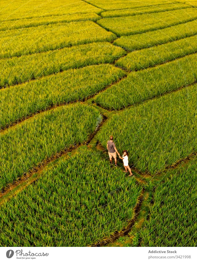 Couple exploring tropical green plantation couple tourism field row walk holding hands male female together nature agriculture summer countryside grass trip