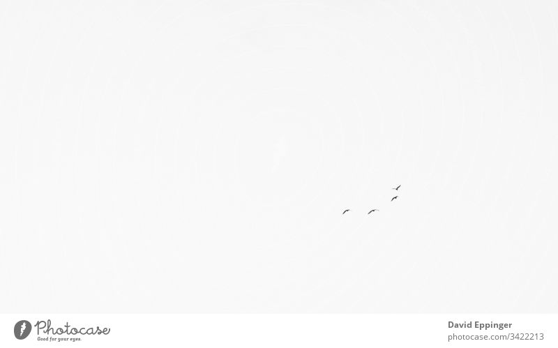 Distant birds flying in the sky at the Outer Banks in North Carolina Sky Minimalistic Monochrome Grayscale black and white seagulls