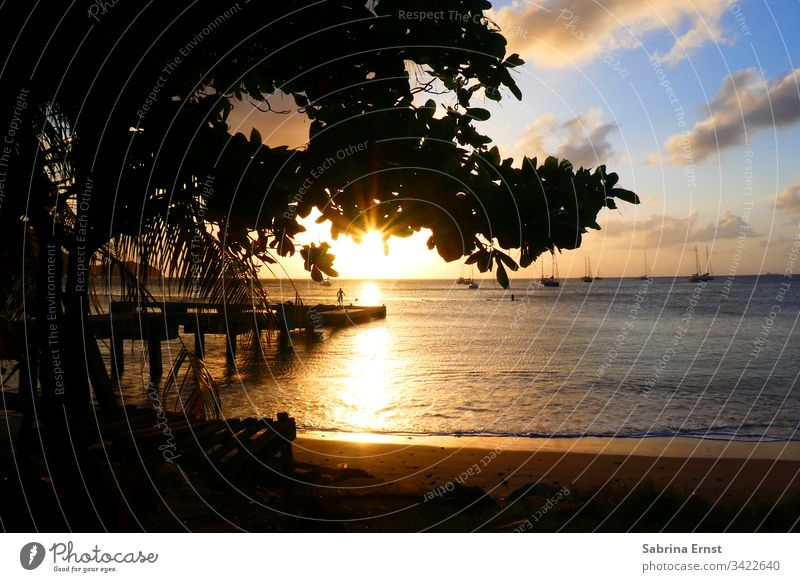 Sunset at the beach of St. Lucia st lucia silhoutte Saint Lucia Ocean Beach Tree evening mood holiday feeling Caribbean Surf beachlife golden Gold Sky panorama