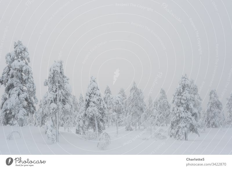 A powdery Norwegian forest on a mountain top. Snow Winter Forest Birch tree Fog Vantage point outlook Norway Empty Natural Nature Cold Calm Snowfall Frost