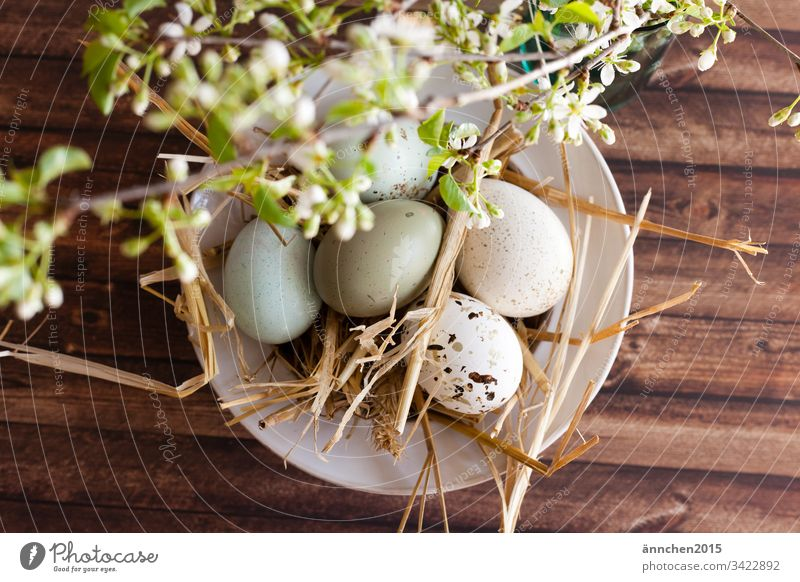 soon is Easter Egg eggs Nutrition Food Multicoloured Interior shot Easter egg Deserted Tradition Spring White Brown Straw shell blossoms Flower Green Wood