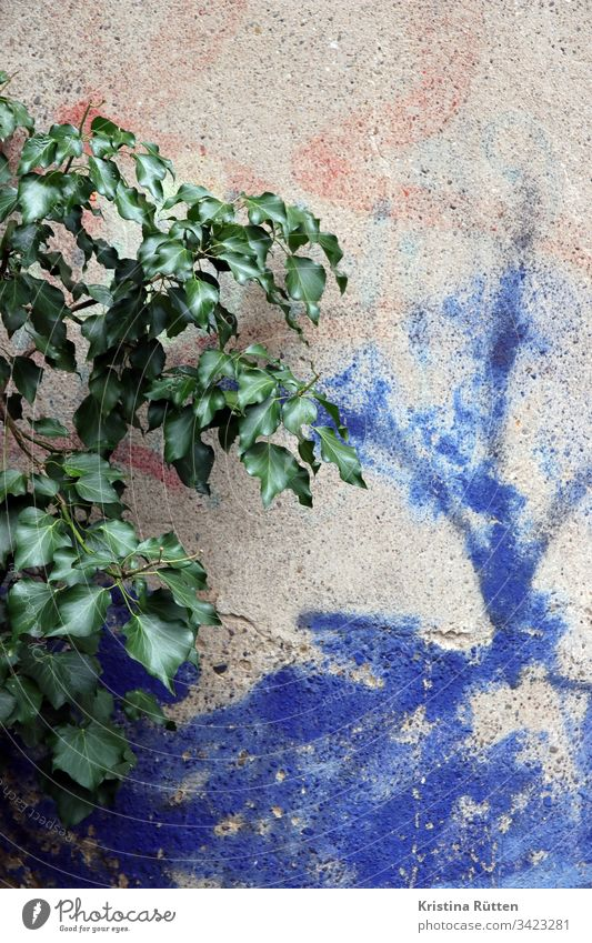 plant on wall with spray paint Wall (building) Wall (barrier) Plant leaves Green Colour Blue structure texture background Material Surface detail Copy Space