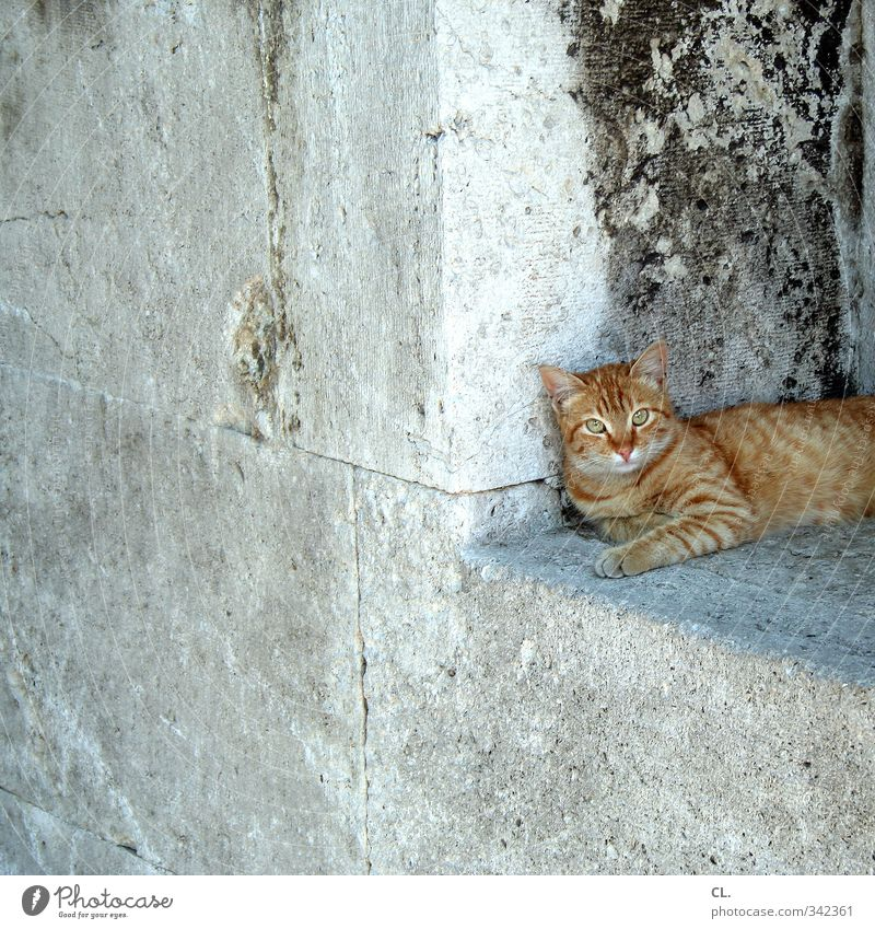 Cat Vacation & Travel City Relaxation Calm Animal Window Wall (building) Wall (barrier) Sit Sleep Observe Curiosity Pelt Animal face Watchfulness