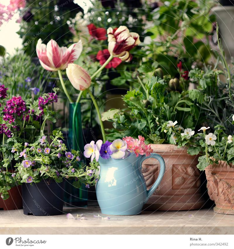 Plant Summer Flower Spring Blossom Garden Idyll Joie de vivre (Vitality) Blossoming Bouquet Tulip Accumulation Anticipation Flowerpot Faded Spring fever