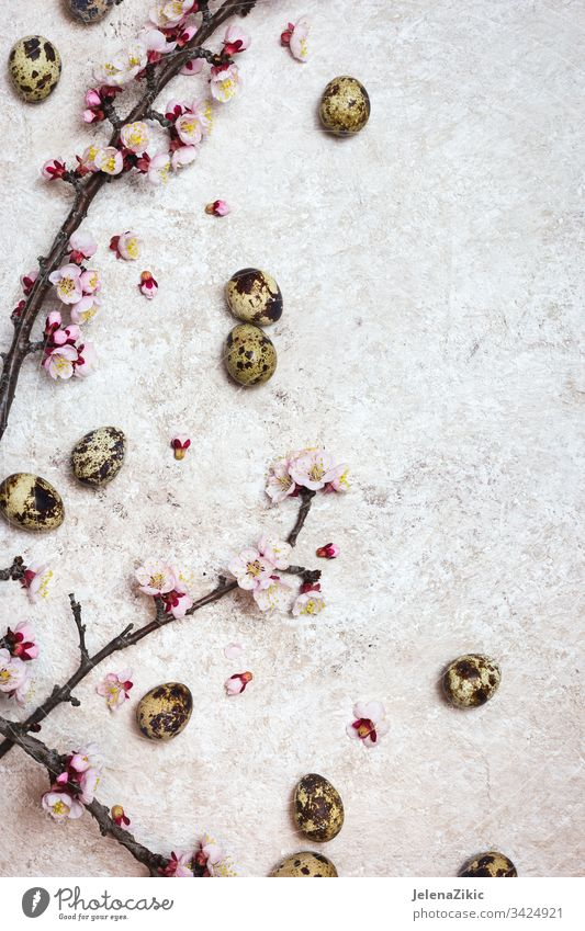 Spring or Easter border background blossom flower bloom branch season plant spring white springtime cherry decoration pink flora covered decorate petal symbol