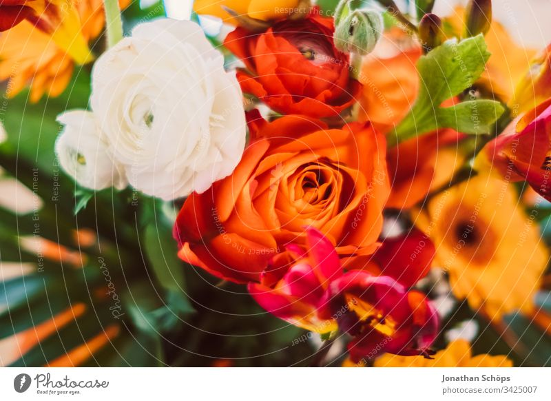 top view of bunch of colorful flowers with gerbara, Freesia, roses and Rosa damascena closeup Bloom Flower scape background beautiful beauty blooming blossom