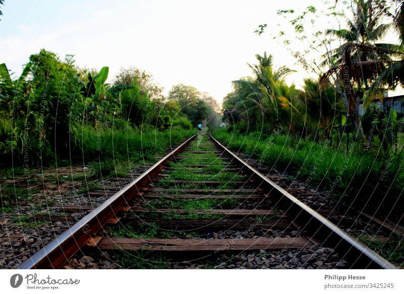 lonely track Gleise Sri Lanka verwildert Eisenbahn wilderness