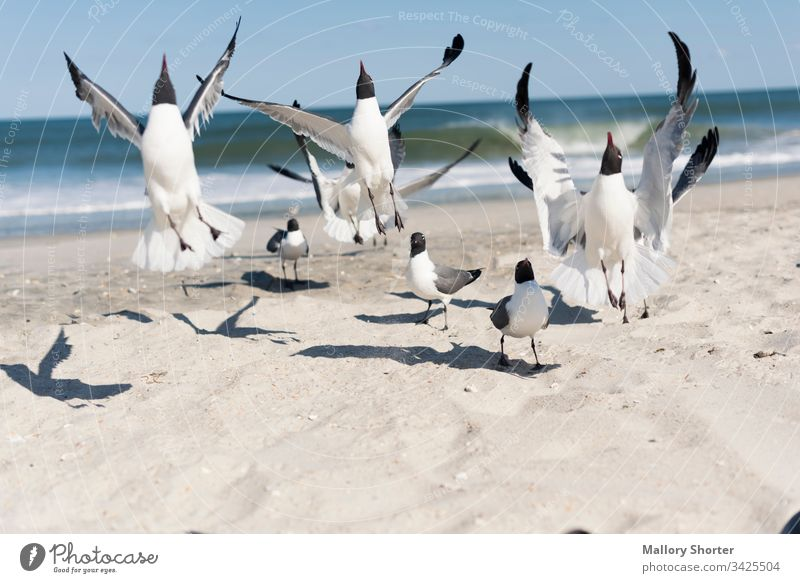 A flock of seagulls jumping on the beach bird birds take flight taking flight excited joy happiness rejoice jump for joy excited animal flock of birds