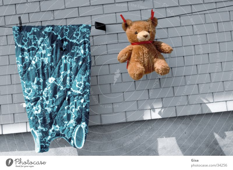 washing day Laundry Teddy bear Dress Clean Wall (barrier) Living or residing Rope Bear Shadow warm/cold colored/grey