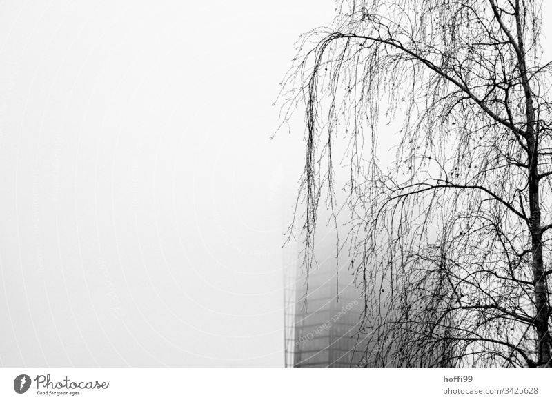 sad birch in fog in front of veiled skyscraper Birch tree Tree hanging branches Suspended Fog Shroud of fog Wall of fog Misty atmosphere High-rise