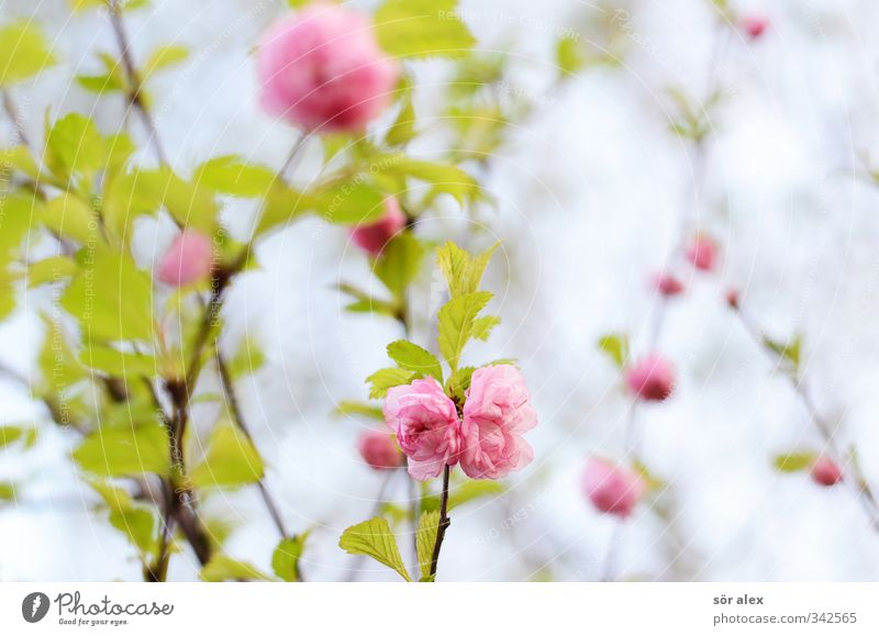 Nature Green Beautiful Plant Flower Leaf Environment Love Spring Blossom Garden Pink Romance Blossoming Positive Exotic